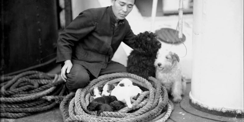 Seaman on YAHIKO MARU with two terriers and a litter of puppies